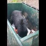 食べ物を探してゴミ箱を漁る野生のクマに声をかけてみた結果