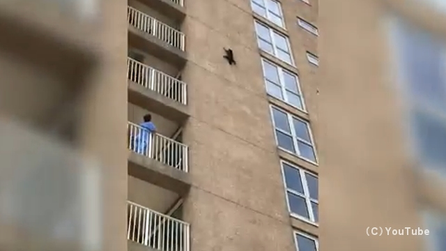 ビルの外壁をよじ登り、途中で身動きがとれなくなってしまったアライグマが選択した解決策が凄い
