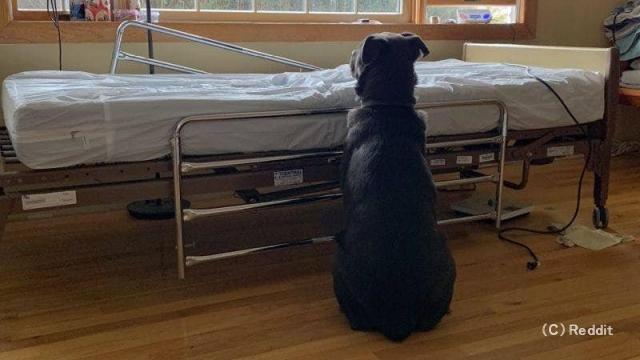 飼い主が亡くなってしまい、ベッドの横で哀しみに暮れる犬