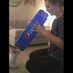 空き箱を使って遊ぶ子猫のアグレッシブな行動に翻弄される飼い主
