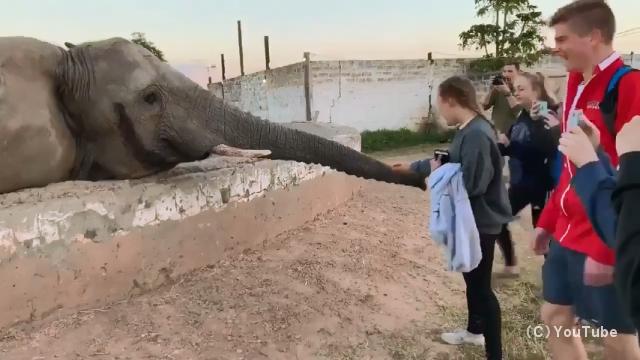 スマホでゾウの写真を撮ろうとしたら鼻パンチを喰らってしまった女の子