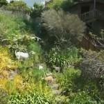 雑草が繁茂した裏庭にヤギを放って6日間、除草の様子を捉えたタイムラプス映像がおもしろい