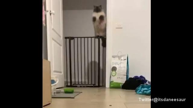 ジャンプから着地まで一糸乱れず、見事な柵越えを披露する猫