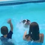 プールで楽しそうに遊ぶ子どもたちからスプラッシュの仕方を学ぶボクサー犬