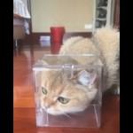 鼻先に蝶がとまって困惑する猫