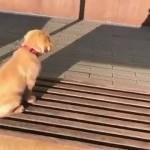 自分の影に反応する子犬がおもしろ可愛い