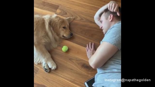 寝転んだままキャッチボールをする怠慢なワンちゃんがおもしろい