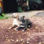 飼い主の指示に従って完璧なシンクロ動作を見せる2匹の愛犬が凄い
