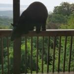 バルコニーをよじ登ってきたクマに「こんにちは」と挨拶されてビビる男性
