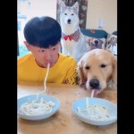 麺の早食い競争を始めた飼い主と愛犬。果たしてその勝敗は?