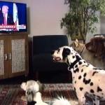 トランプ大統領のテレビ演説に反応するワンコたちがおもしろいwww