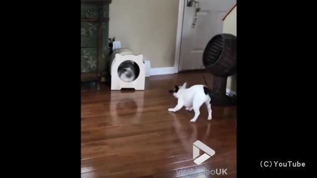 しつこく吠えまくる子犬を一瞬にして黙らせる先輩猫