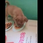 テーブルクロスに描かれたスパゲッティを食べようと一生懸命な子犬