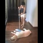 床を掃除している間、動こうとしないワンコはお疲れの模様