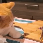 玉ねぎのみじん切りをすぐそばで見ていた猫、とんだ災難に遭うwww