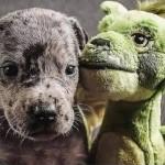 子犬の頃に与えたぬいぐるみを成犬になった今も大切にしているワンコのビフォー・アフター写真