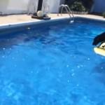 ボディボードに飛び乗ってプールに落ちたボールを拾うワンコ