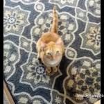 名前を呼ばれると転げまわる奇妙な猫