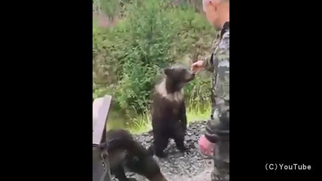 可愛いからといって野生の子熊に不用意に手を出すとこうなります
