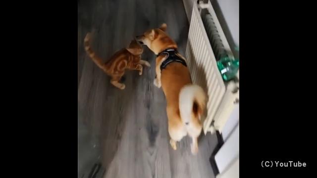 散歩から戻って来た親友のワンコを玄関で出迎える仲良しのニャンコ