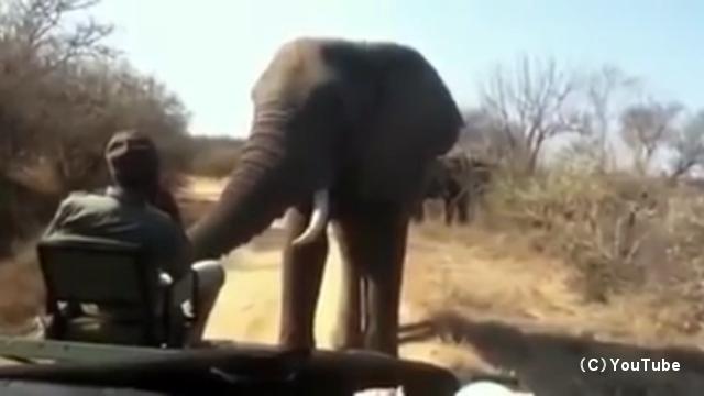 野生のゾウが迫ってきても慌てずに座ったまま冷静に対処する男性が凄い
