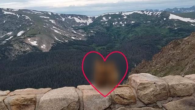 ロッキー山脈で愛を誓い合う可愛らしい動物に遭遇したんだけど♡