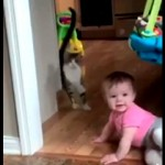 赤ちゃんとぶつかりそうになり、慌てて回避する猫のリアクションが凄まじい!