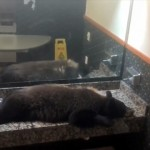 ホテルロビーの女性用トイレにクマが居座る珍事が発生(アメリカ)