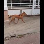 家に近付いてくる不審者に気付いた番犬の奇妙なリアクション