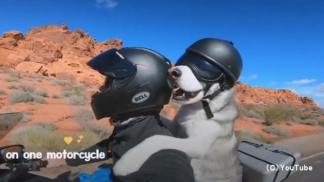 愛犬とともにバイクでアメリカ50州走破の旅に出た男性