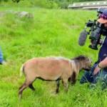 世界でも稀少な羊を取材中、珍しいハプニングに見舞われたカメラマン