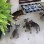 執拗に絡んでくる子犬たちをどうしたものかと考えあぐねる先住猫