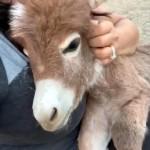 抱っこが大好きな愛らしいロバの赤ちゃん