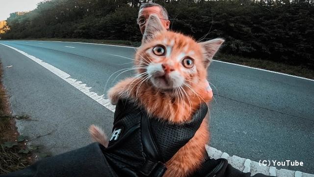 高速道路の中央でうずくまる子猫を救出・・・ヒーローになったモーターサイクリスト