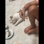 寝たふりをした猫 … 食事中の女の子の魚を掠め取る