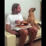 食事中の飼い主の食べ物が気になるも、見て見ぬふりをするワンコ