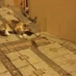 ネズミを追いかけようとして思わぬ反撃に遭いおっかなびっくりな猫