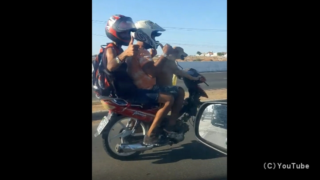 後ろに人間二人を乗せてバイクを運転する犬(ブラジル)