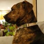 聞こえないふりをして無視し続ける犬を振り向かせる魔法の言葉