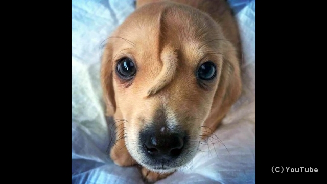 おでこに尻尾のある子犬が保護され、ネットで話題に……