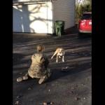 数ヶ月ぶりの飼い主との再会に戸惑い遅延反応する愛犬