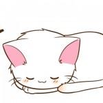 体の収まるスペースがあれば何処でもベッドにしてしまう猫