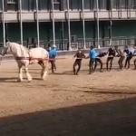 馬1頭 vs 大人10人で綱引き対決してみた結果