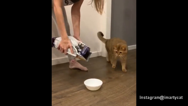 待ちに待ったご飯の時間…いつもと違う飼い主の行動に唖然とする猫
