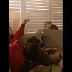 ブラインドを開けたい猫と閉めたい飼い主の攻防戦がおもしろい