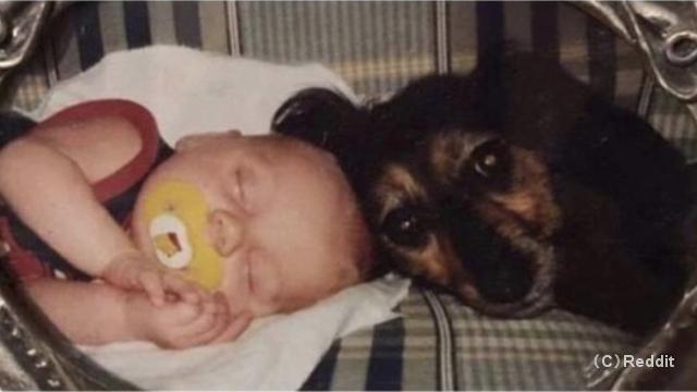 赤ちゃんの時からともに育ってきた愛犬の哀愁に満ちた表情が切なくて…