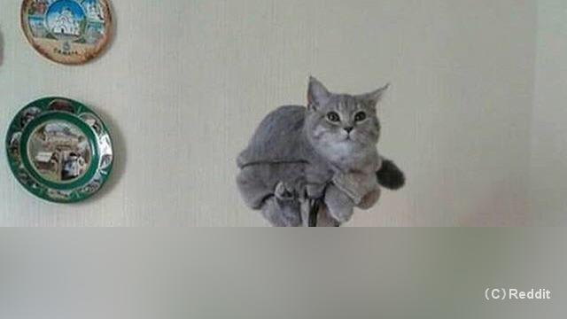 自分が植物になったつもりでいる猫
