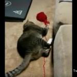 イタズラの瞬間を飼い主に見られていたと気付いたときの猫の反応がおもしろい