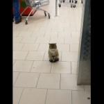 お店の自動ドアの前でお客さんを出迎える猫