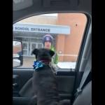 行方不明になっていた愛犬との突然の再会に感極まって号泣する14歳の少年